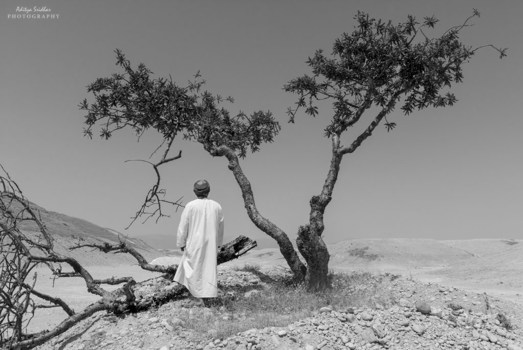My Omani Guide explaining the importance of Frankincense to Salalah